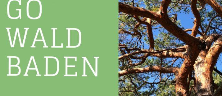 Stress-Prävention im Wald