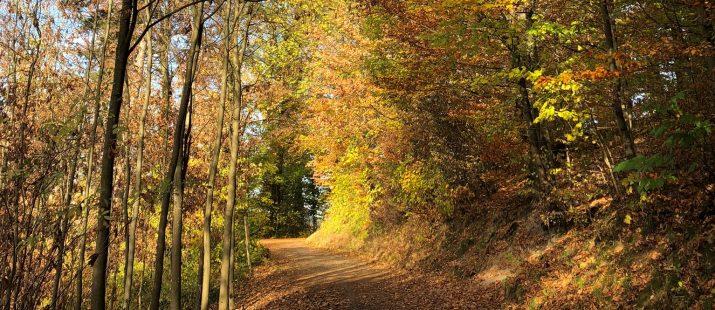Waldbaden im Exotenwald Weinheim