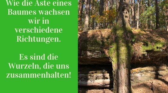 Baum Entdeckung beim Waldbaden