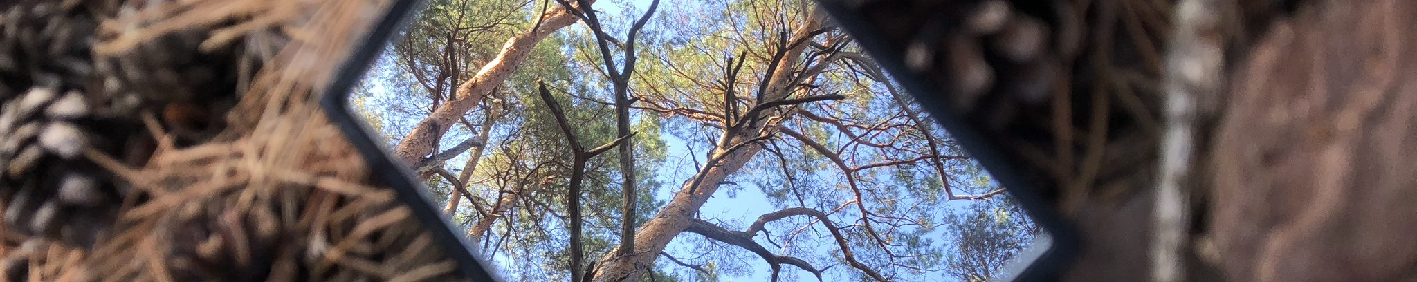 Waldbaden – dem Stress vorbeugen