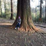Waldbad unterm Mammutbaum