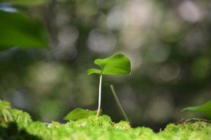 Mit Abstand wachsen. Ein kleiner Schössling wächst im Wald